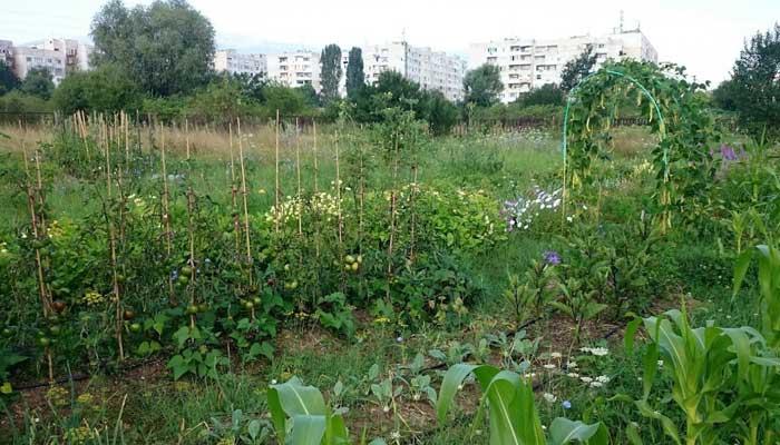 Градско градинарство – София / Градско земеделие – София / Urban farming – Sofia / Urban gardening – Sofia